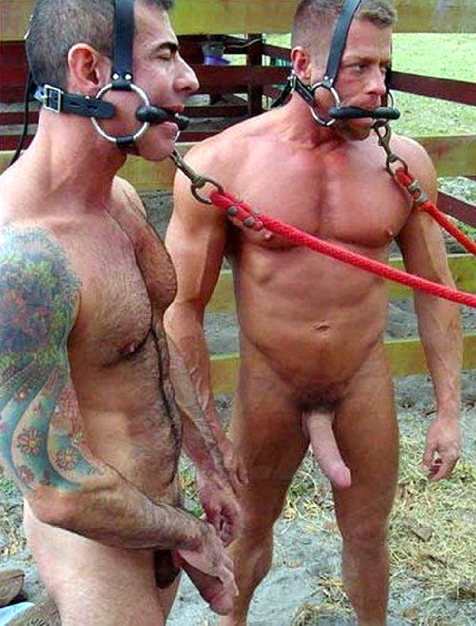 Gay bullwhipped video