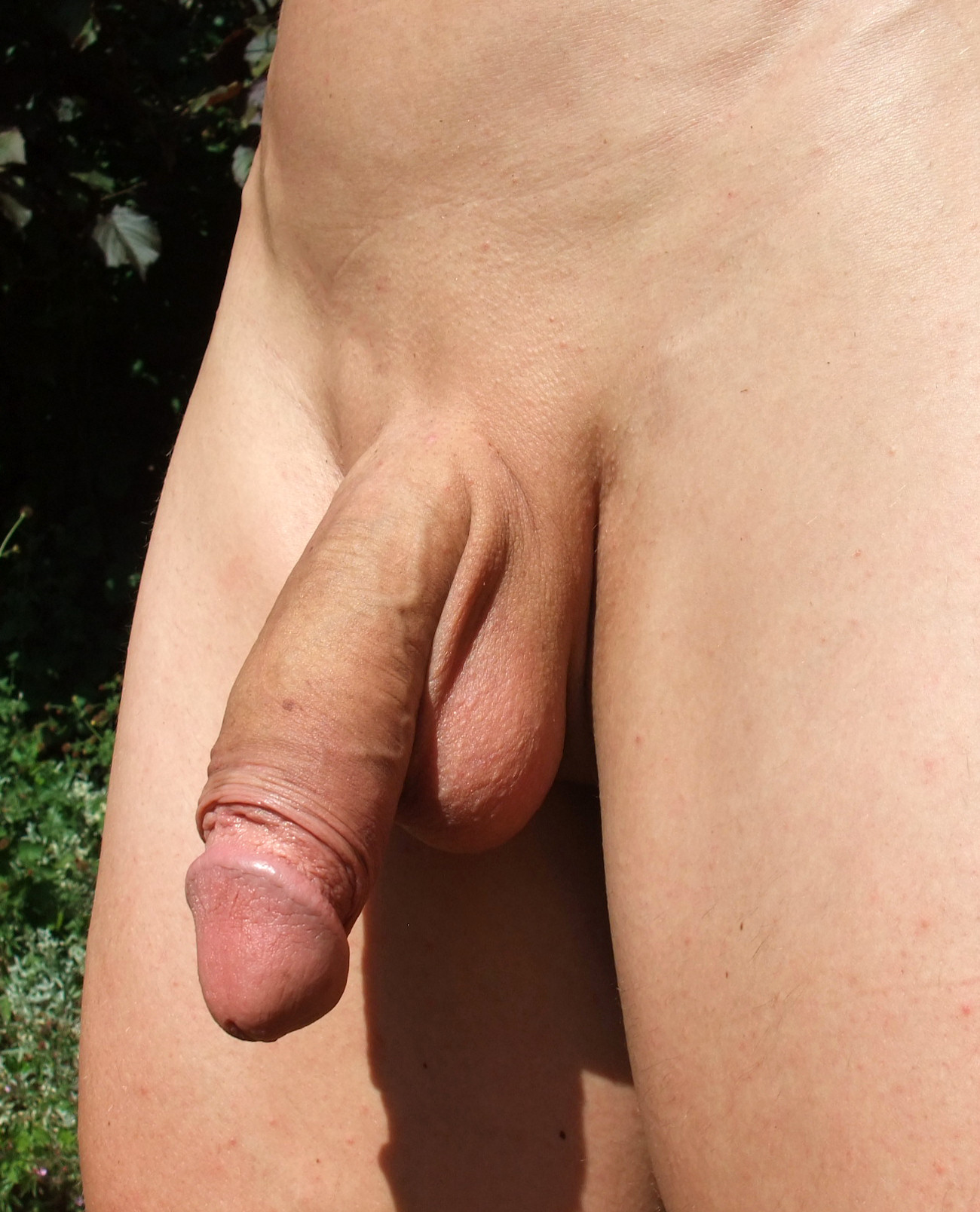 Penis naked shaved erect